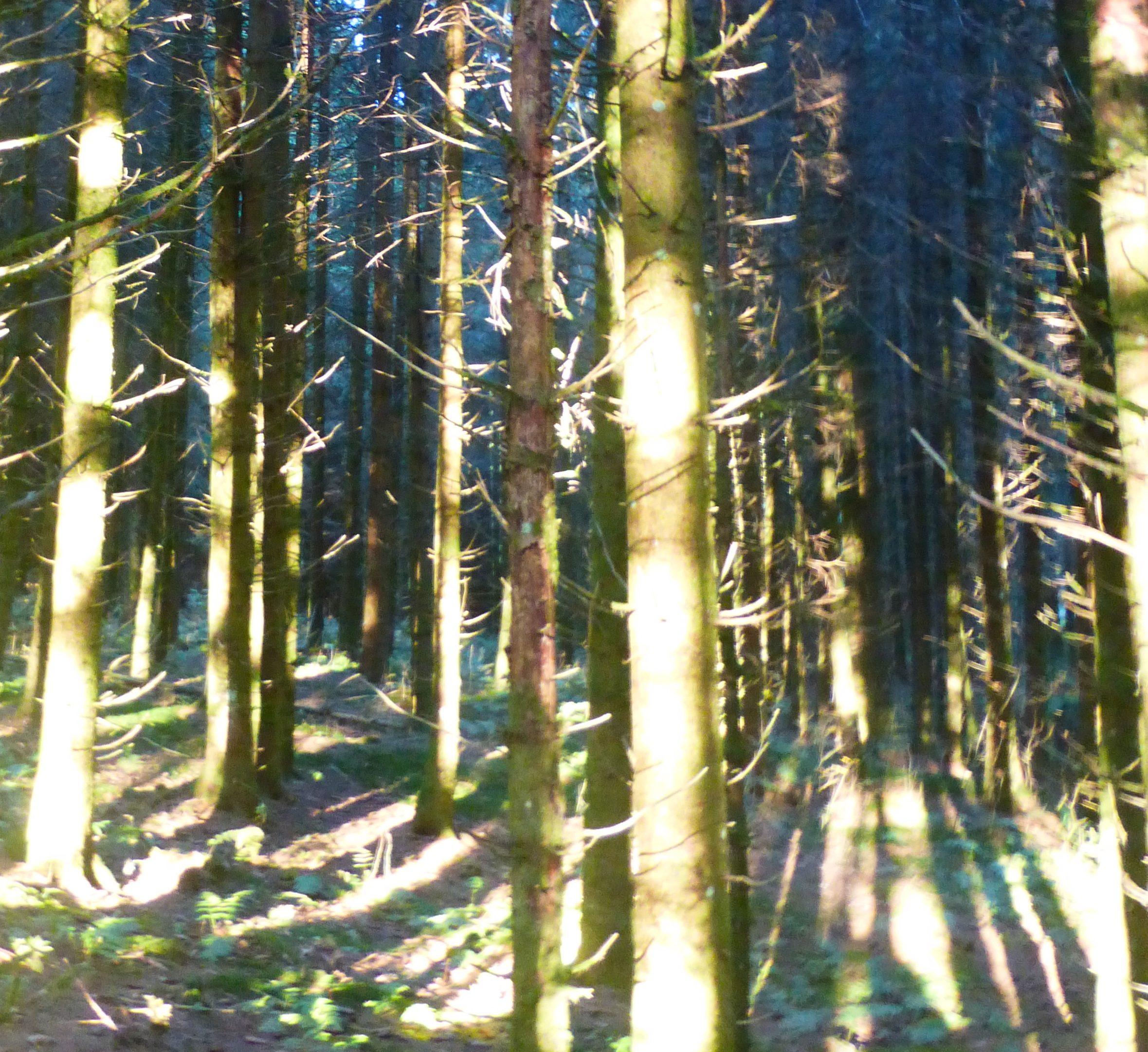Waldbaden im Hotzenwald