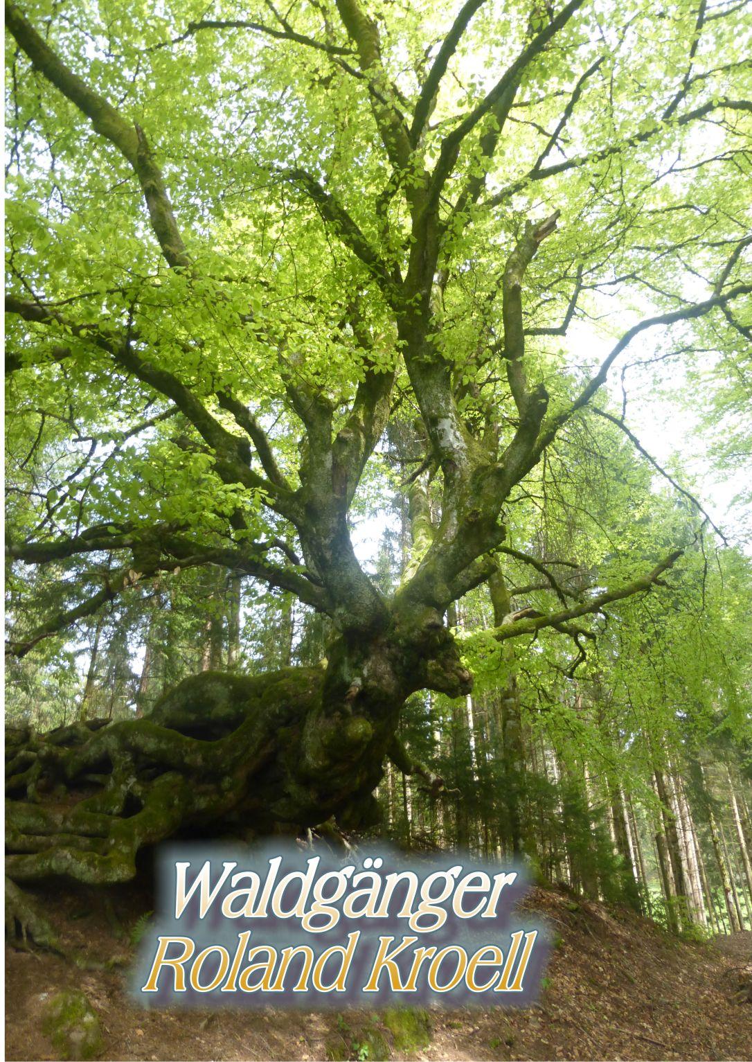 Waldgänger Cover